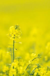 Billingshurst rape field, sussex
