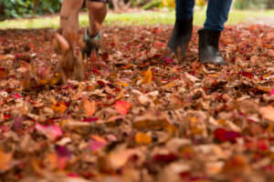 Leaves and feet, autumn leaves, Sheffield Park, Sussex Photographer