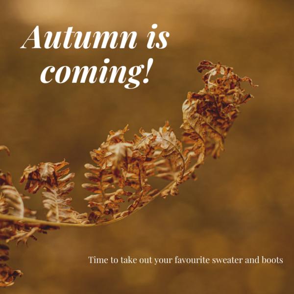 Autumn Mini Photo Sessions